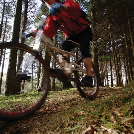 Mountain biking Tollymore Forest